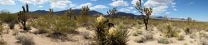 DSC01667_Mojave Landscape