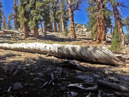 Fallen tree with swirls