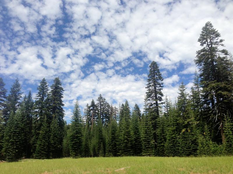 Meadow vista