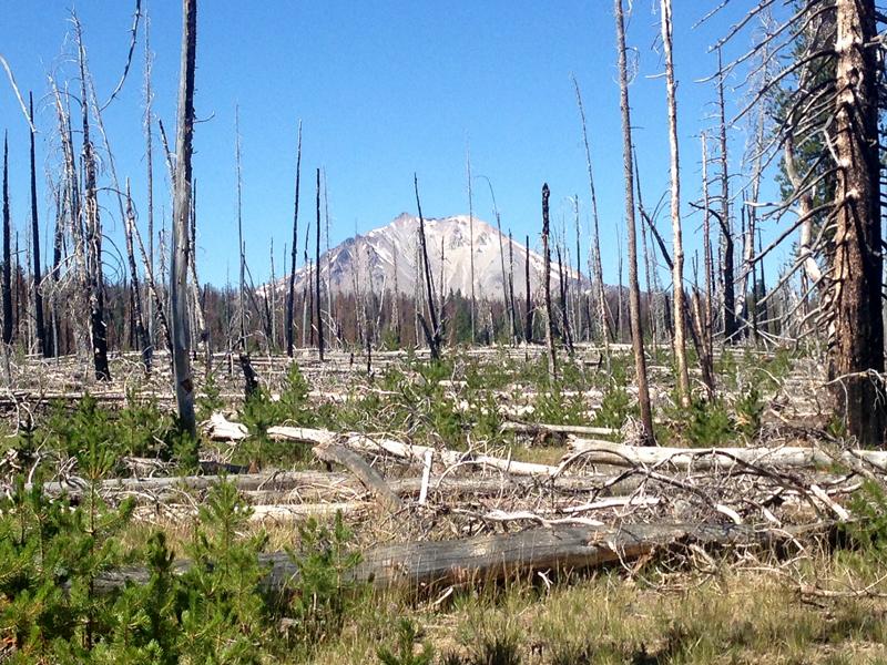 Lassen viewed through a dead landscape