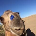 Halteman_Camel Ride_5_IMG_1274